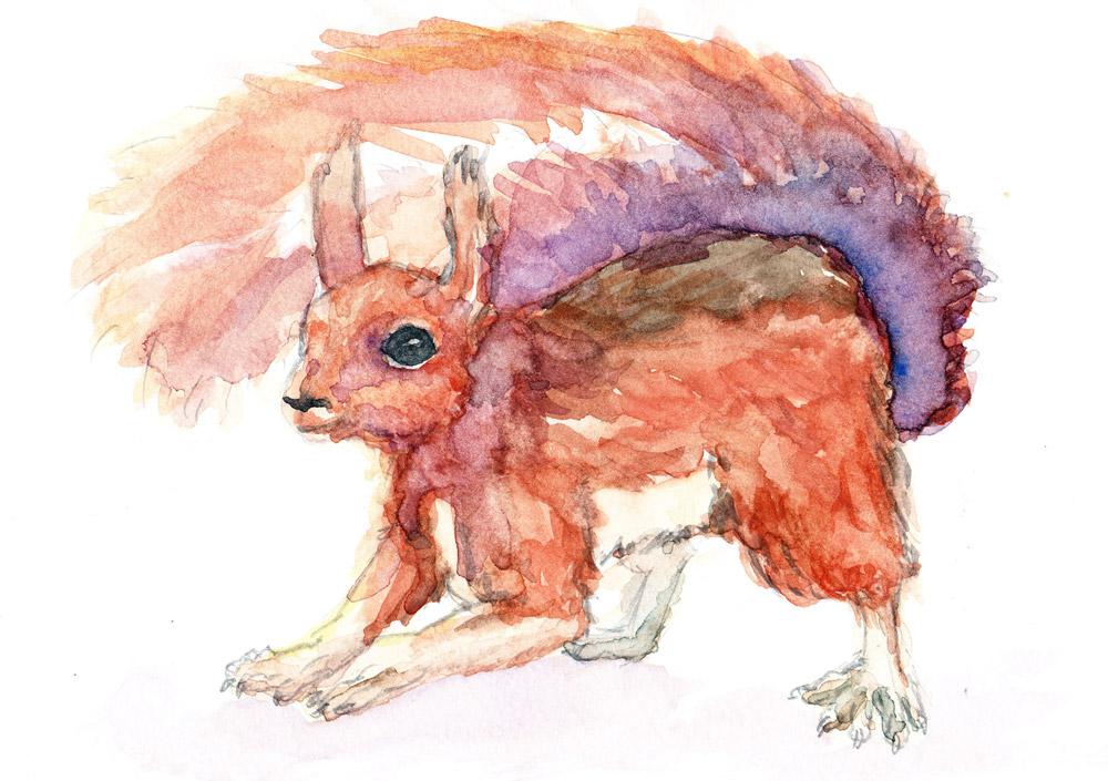 squirrelaqua