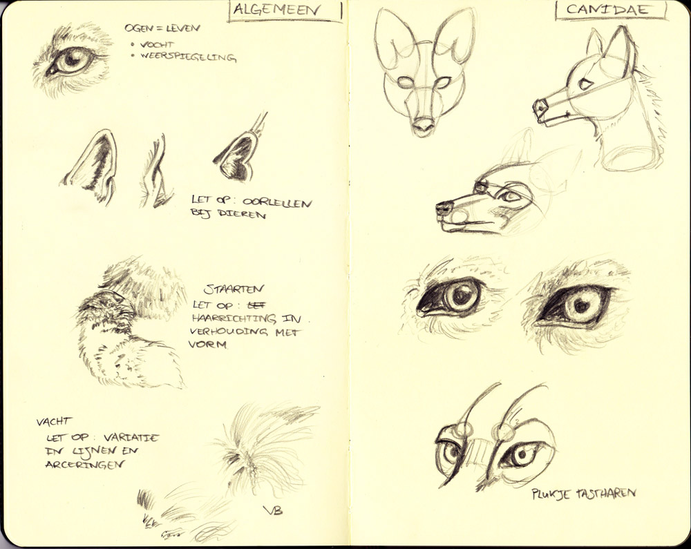 wolfsketches